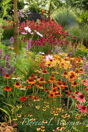 Echinacea 'Dixie Blaze' - Agastache 'Blue Boa' - Cottage Garden_2052