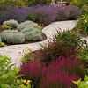 Erica cinerea 'Atropurpurea' - Phormium tenax 'Tom Thumb' - garden path landscape_2083