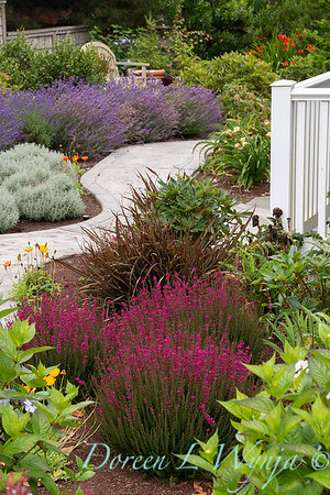 Erica cinerea 'Atropurpurea' - Phormium tenax 'Tom Thumb' - garden path landscape_2084