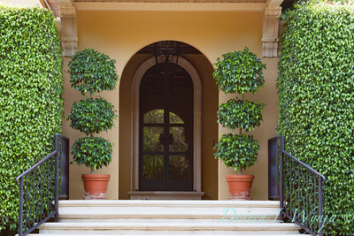 Ficus benjamina formal front door entry_2743