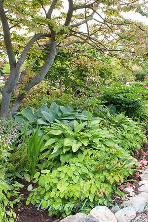 Woodland shade garden_1147