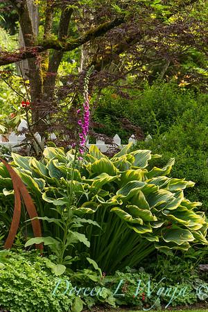 cottage garden; Hosta; Plantain Lily; variegated