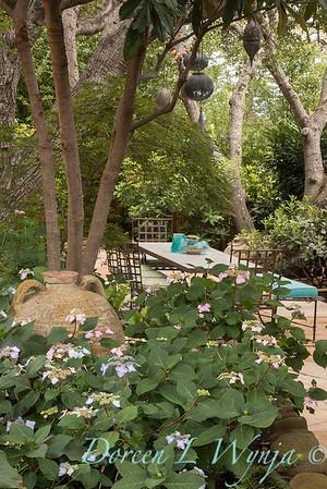 Hydrangea macrophylla normalis under Eriobotrya japonica - outdoor dining_0659