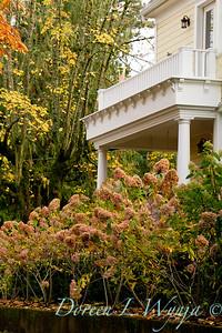 Hydrangea paniculata_507