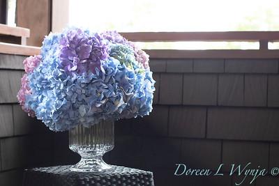 2375 Hydrangea macrophylla 'Penny Mac' in a vase_3070