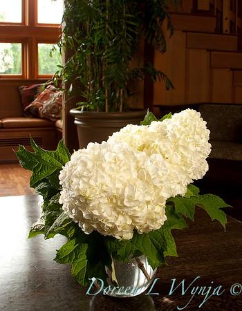 2832 Hydrangea quercifolia Vaughn's Lillie_011