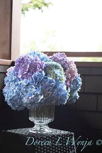 2375 Hydrangea macrophylla 'Penny Mac' in a vase_3064