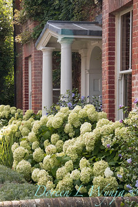 Hydrangea arborescens 'Annabelle' landscape - front door entry way_168