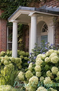 Hydrangea arborescens 'Annabelle' landscape - front door entry way_174