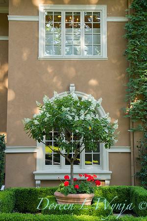Hydrangea paniculata Tardiva_510