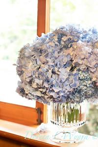 4196 Hydrangea macrophylla 'Nikko Blue' in a vase_3059