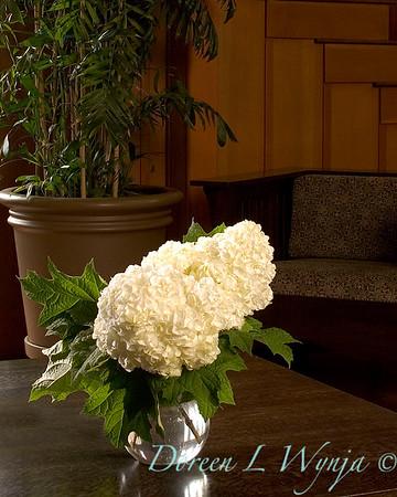 Hydrangea quercifolia Vaughn's Lillie_009B