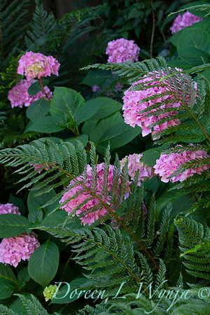 fern and hydrangea garden textures_2516