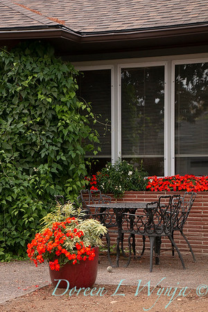 Impatiens walleriana Dazzler Scarlet - Pieris japonica 'Variegata' - patio container_1634