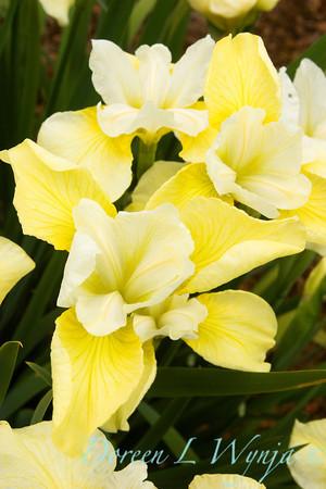 Iris Butter & Sugar_006