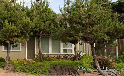 Juniperus horizontalis_9709