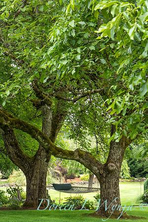 Juglans regia - hammock garden landscape_0427