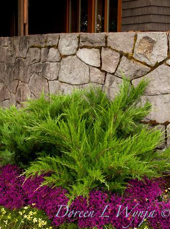 Juniperus chinensis Monlep_015