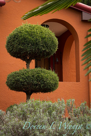 Juniperus Topiary_5342