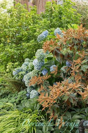 Hydrangea - Rhododendron_3678