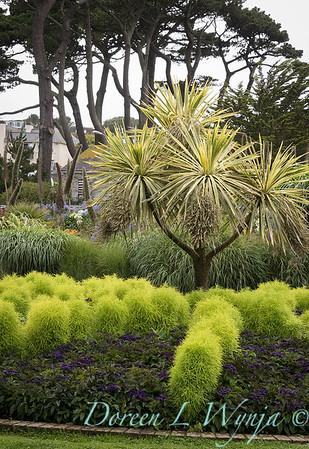Bassia scoparia - Heliotropium arborescens - Cordyline australis 'Albertii' formal garden_7219
