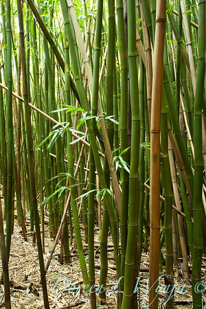 Bamboo Forest_009