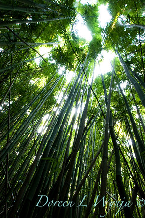 Bamboo Forest_010