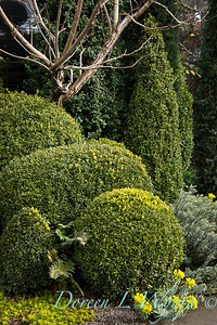 Buxus topiary shapes_1956