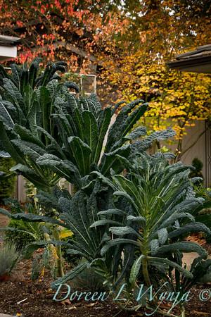 Brassica oleracea Lacinato Dinosaur_019