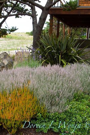 Calluna vulgaris 'Silver Knight' landscape_0320