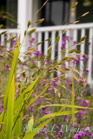 Chasmanthium latifolium_Doreen Wynja_031