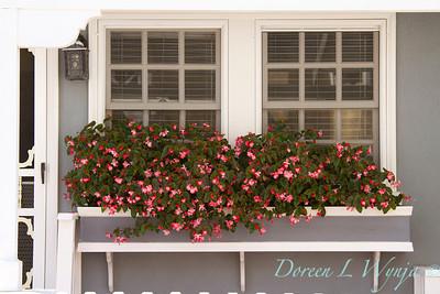 Begonia flower box_6516