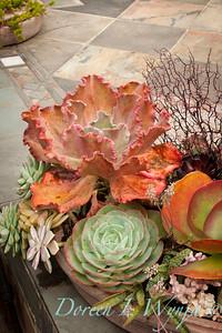 Succulent garden_4500