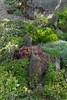 Rock Slab succulent garden_5006