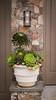 Succulent container garden_6916