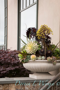 Succulent container garden_6928