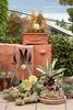 Succulent garden_4647