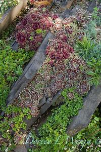 Rock Slab succulent garden_5013
