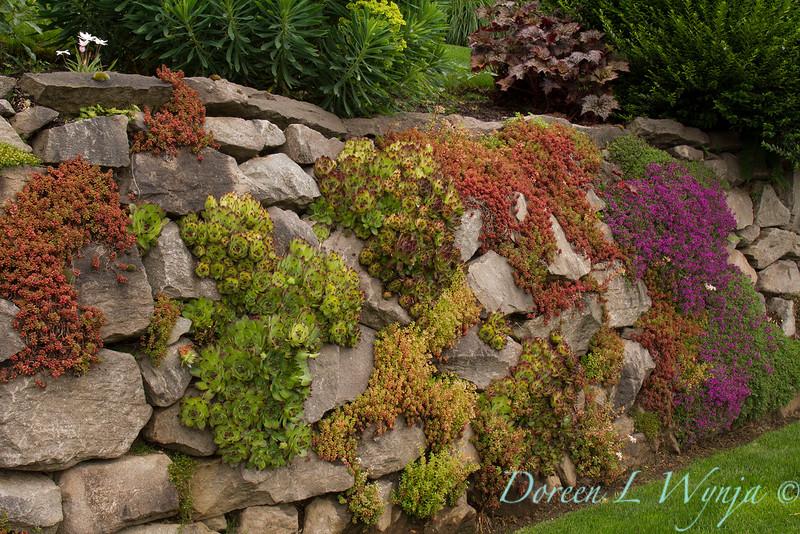 Succulent Rock Wall_002