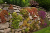 Succulent Rock Wall_002
