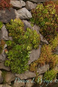 Succulent Rock Wall_003