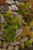 Succulent Rock Wall_003