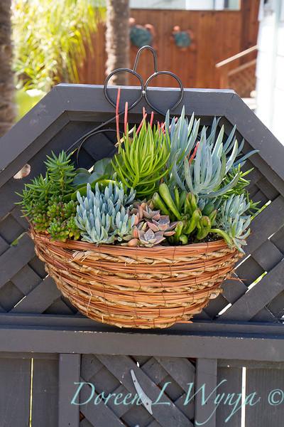 Succulent Wall Basket_2073