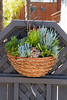 Succulent Wall Basket_2073