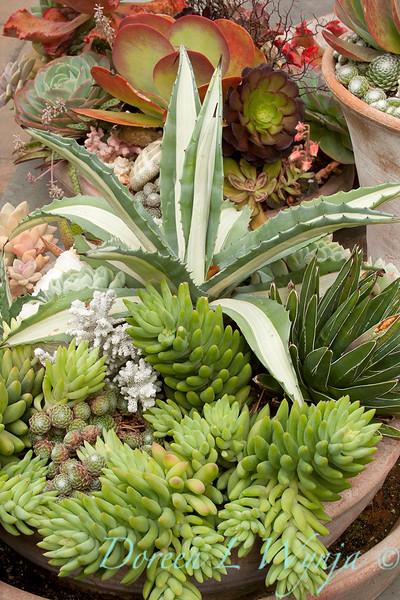 Succulent garden_4498