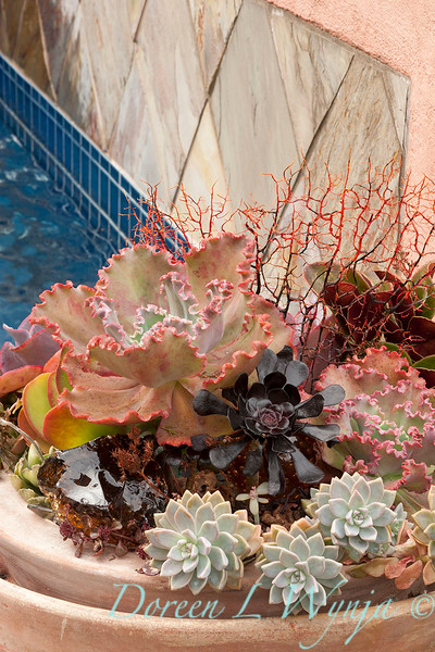 Succulent garden_4542