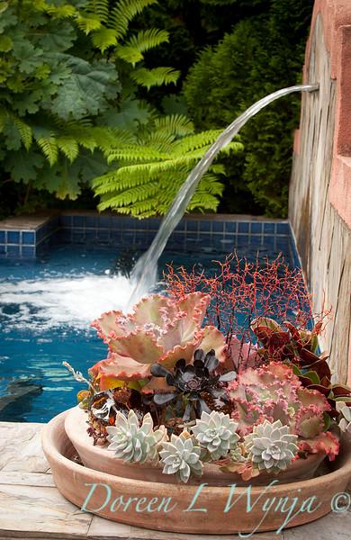 Succulent garden_4552