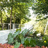 Colocasia esculenta - Coleus - Foot bridge_0917