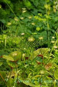 Flower calyx - garden textures_2768