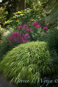 Hakonechloa macra 'Aureola' - Hydrangea macrophylla 'Merritt's Supreme' - Astilbe chinensis 'Purple Rain'_3906